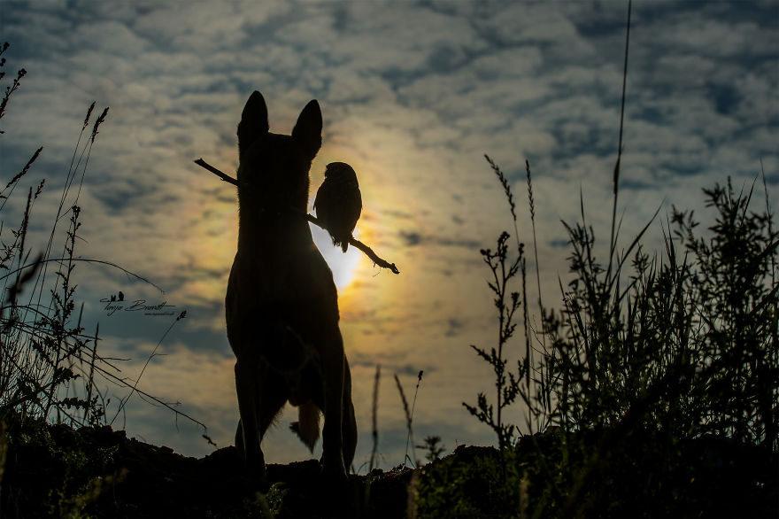 Tình bạn của chú chó Ingo 4