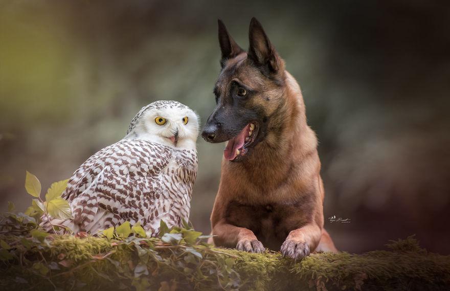 Tình bạn của chú chó Ingo 26