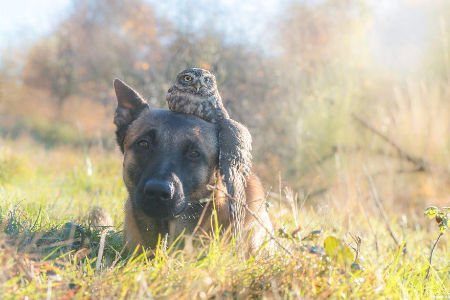 Tình bạn của chú chó Ingo 7