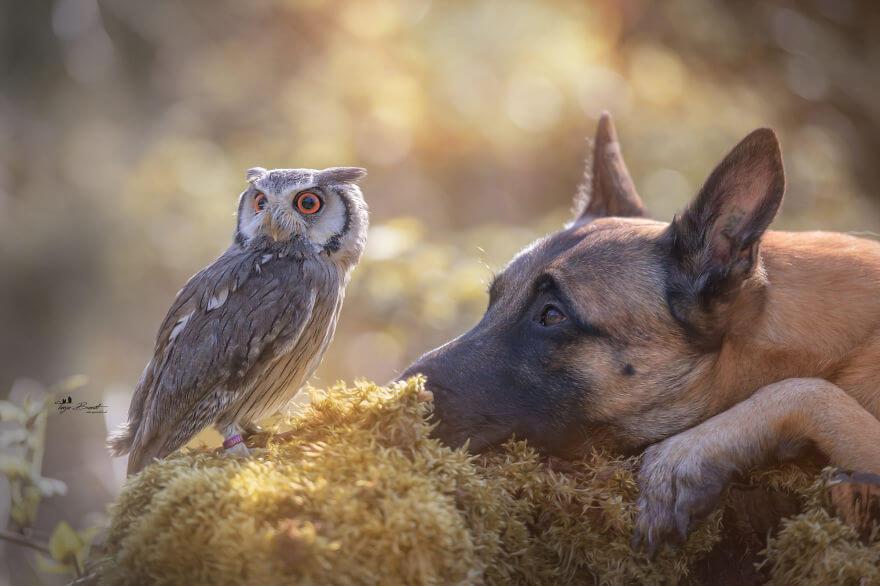 Tình bạn của chú chó Ingo 8