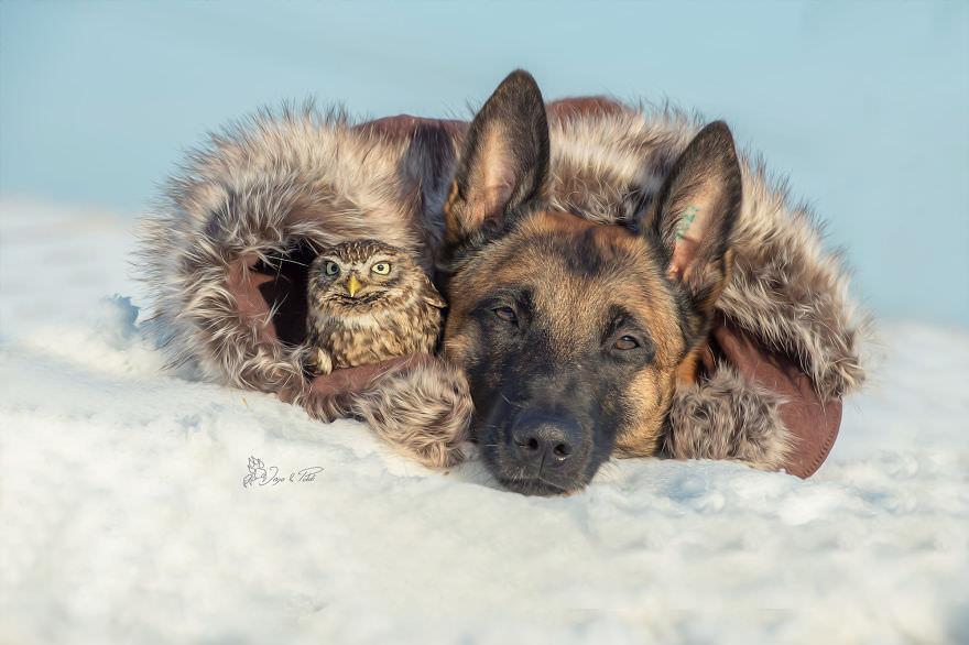 Tình bạn của chú chó Ingo 14