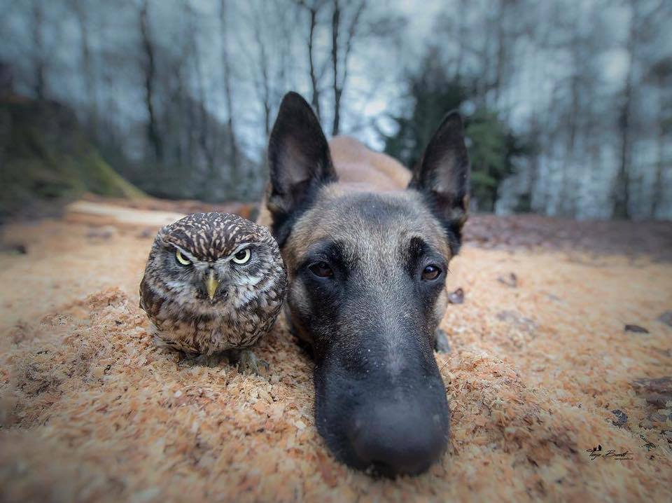 Tình bạn của chú chó Ingo 23