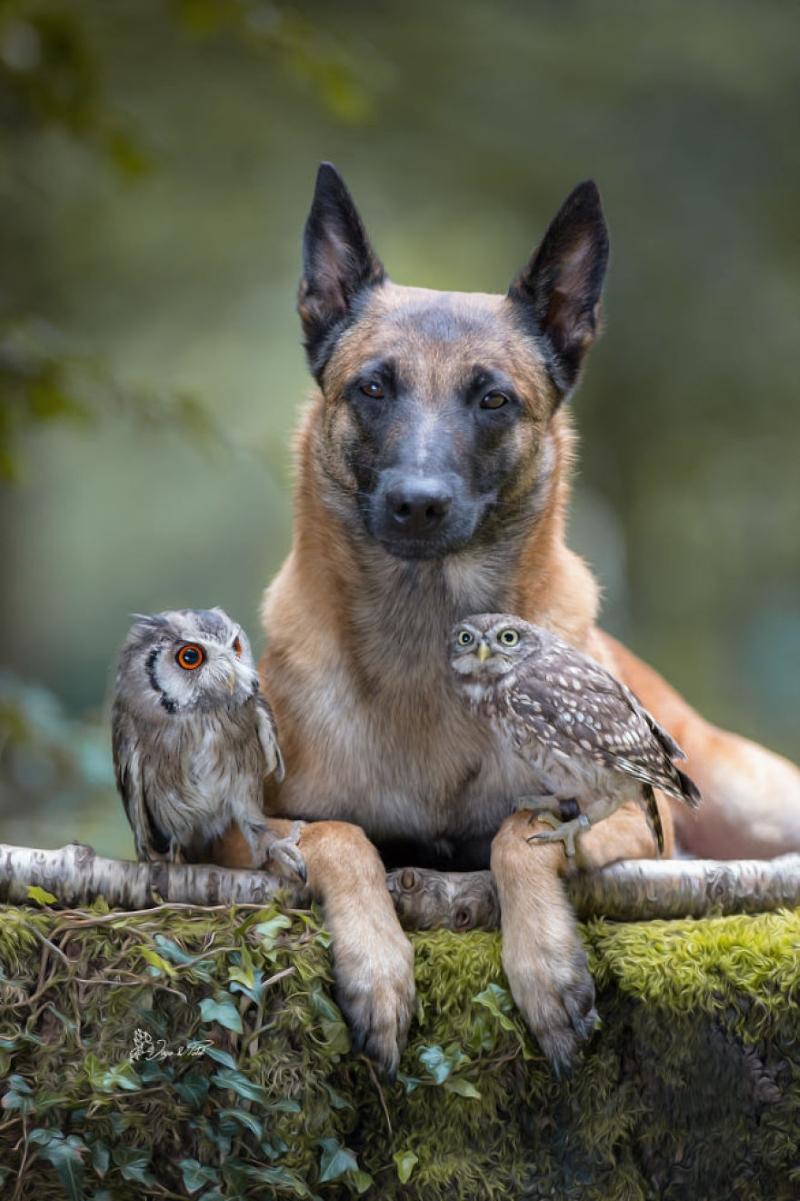 Tình bạn của chú chó Ingo 27