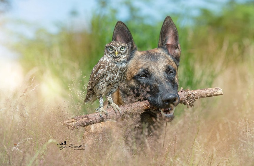 Tình bạn của chú chó Ingo 16