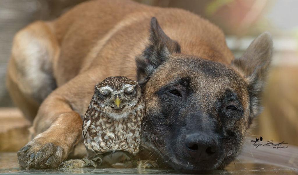 Tình bạn của chú chó Ingo 12