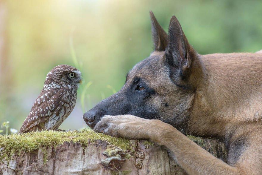 Tình bạn của chú chó Ingo 22