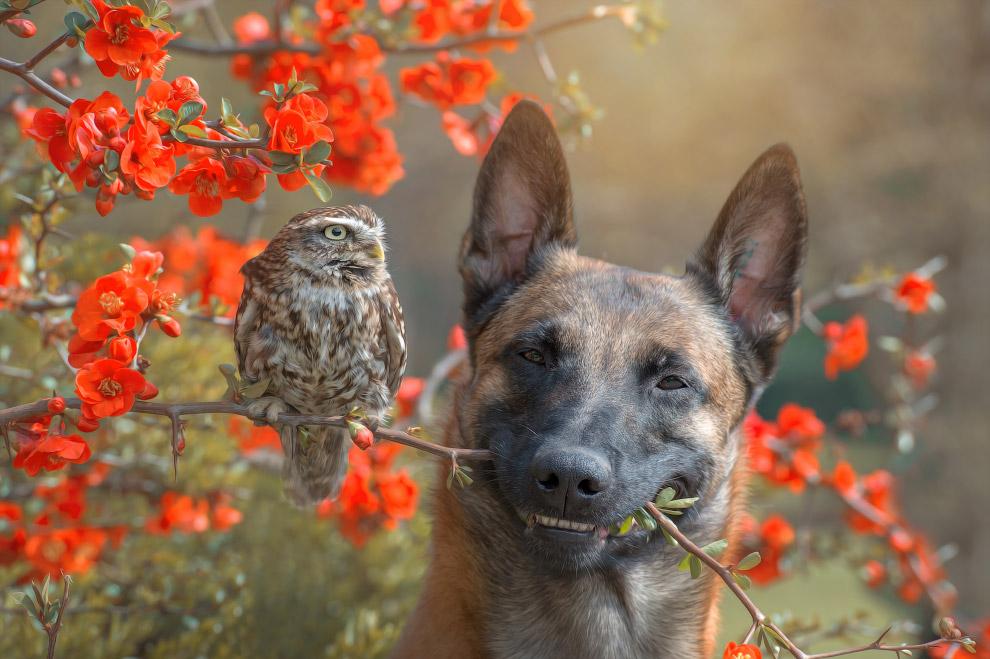Tình bạn của chú chó Ingo 24
