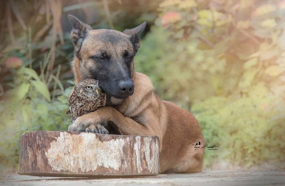 Tình bạn của chú chó Ingo 18