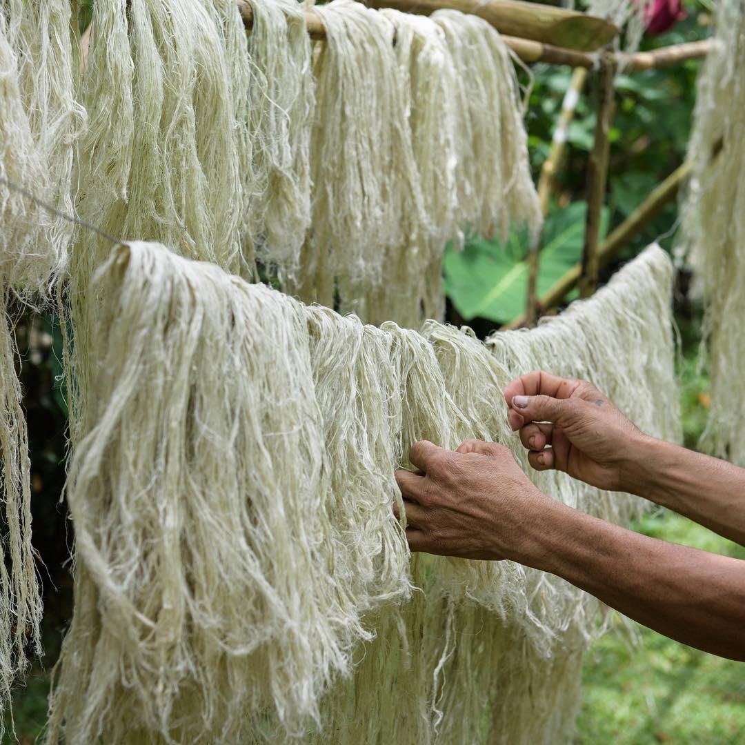 Vải sợi lá dứa - chất liệu tiềm năng cho ngành công nghiệp thời trang bền vững 1