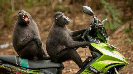 Những bức ảnh hài hước về động vật của cuộc thi Comedy Wildlife