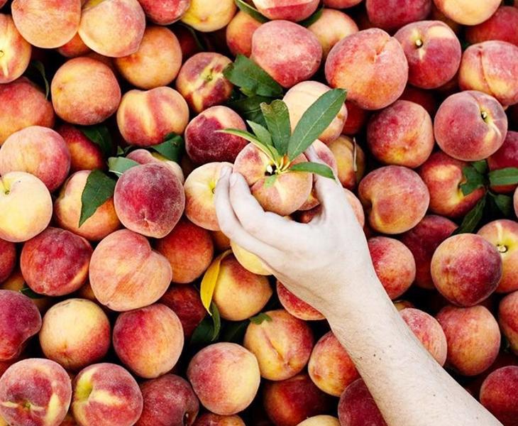 trái cây cấp nước 8