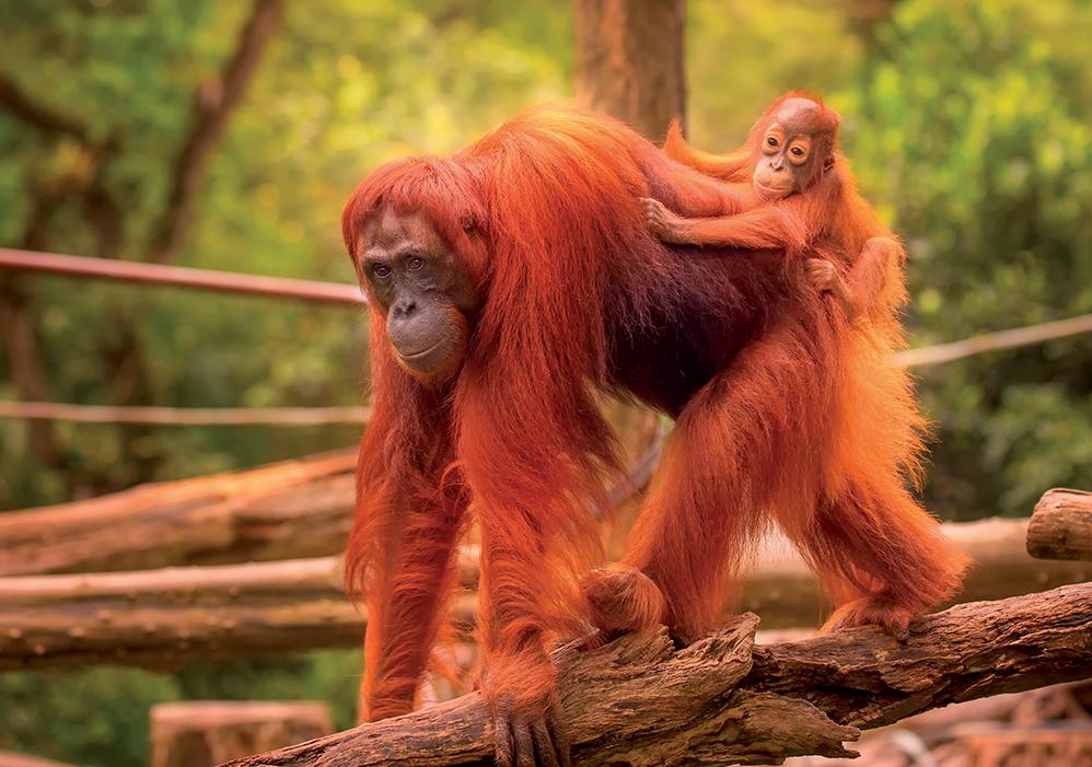 Borneo 11