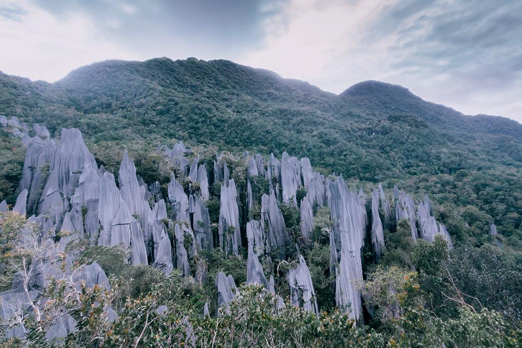 Borneo 13