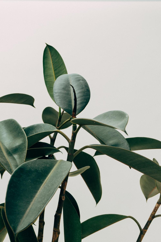 loại cây 4
