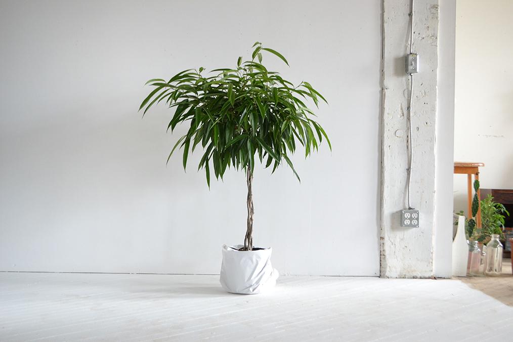 loại cây 8