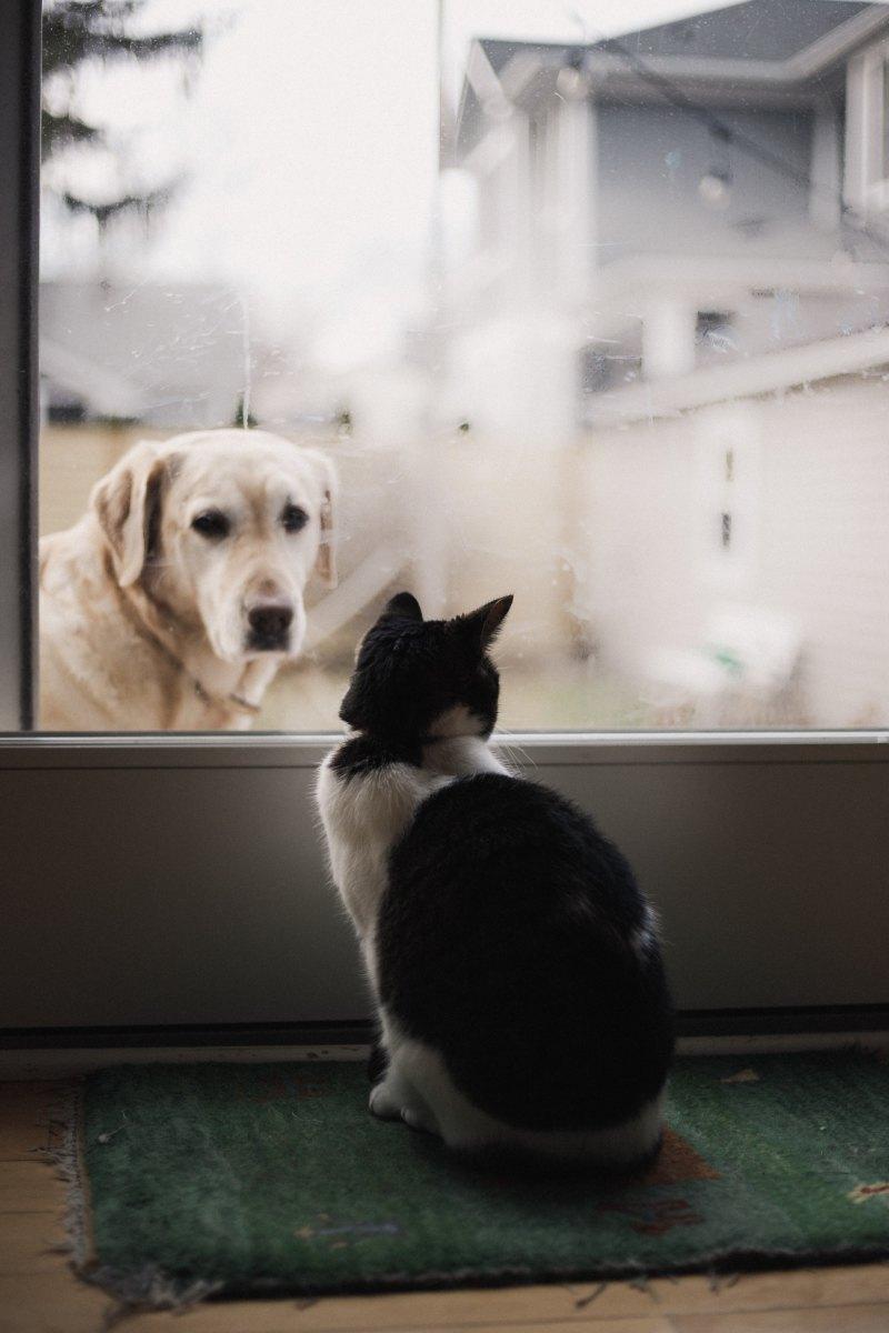 nuôi thú cưng 6