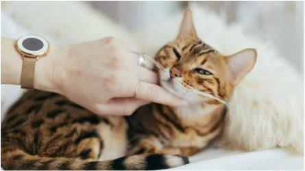 Khoa học đã chứng minh: Nuôi thú cưng có thể giúp bạn giảm căng thẳng