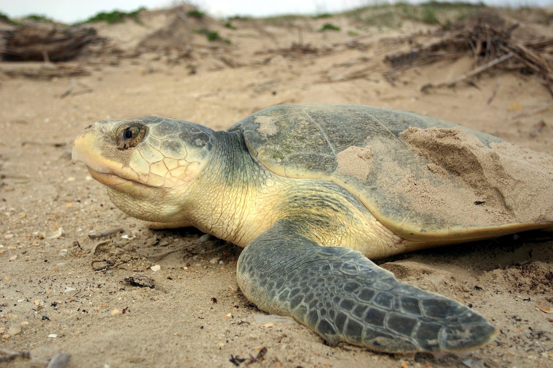 loài động vật biển 2