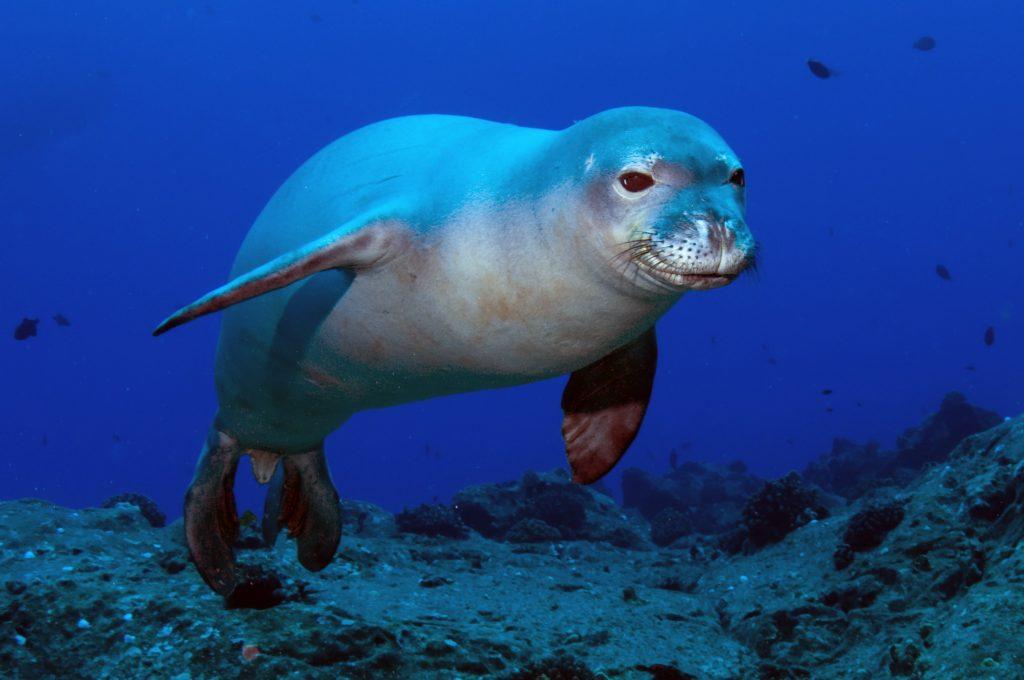 loài động vật biển 3