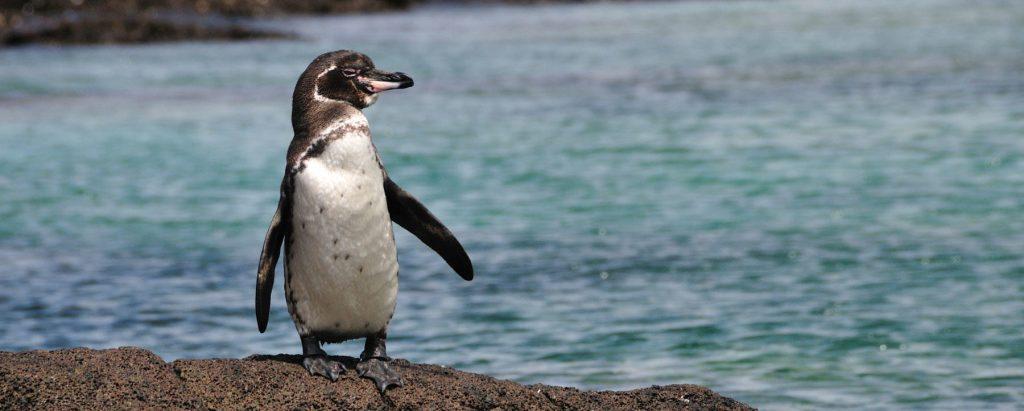 loài động vật biển 5