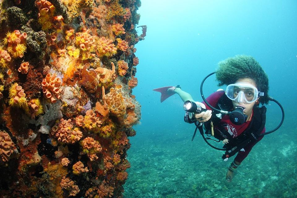 elle việt nam địa điểm lặn biển 18