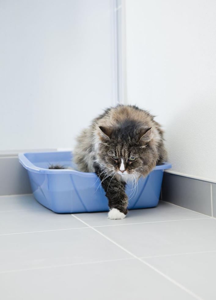 tật xấu của mèo 1