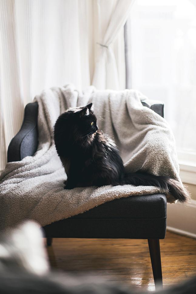 tật xấu của mèo 2