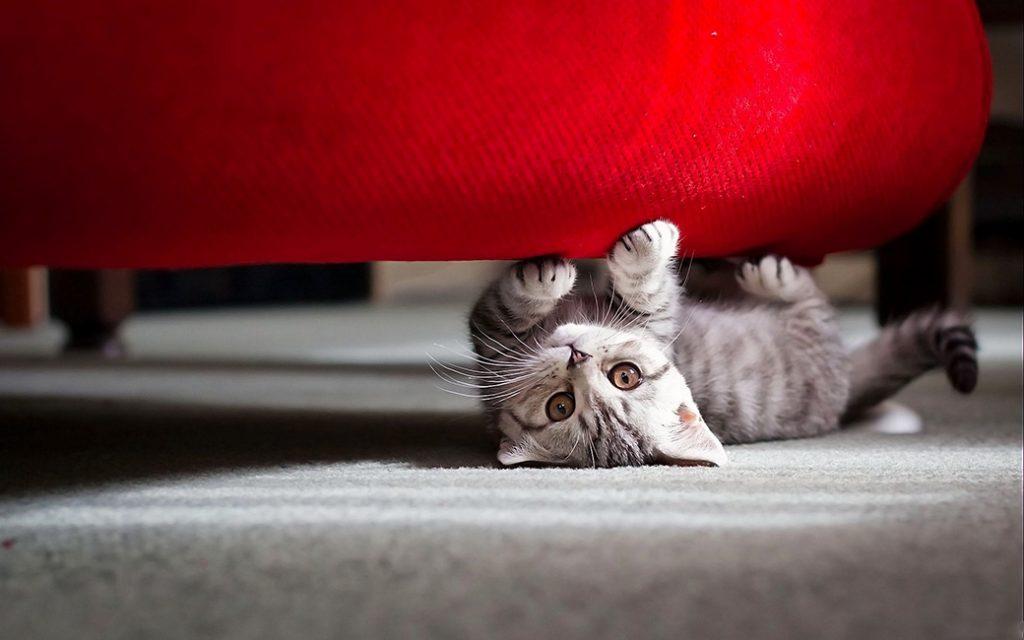 tật xấu của mèo 3