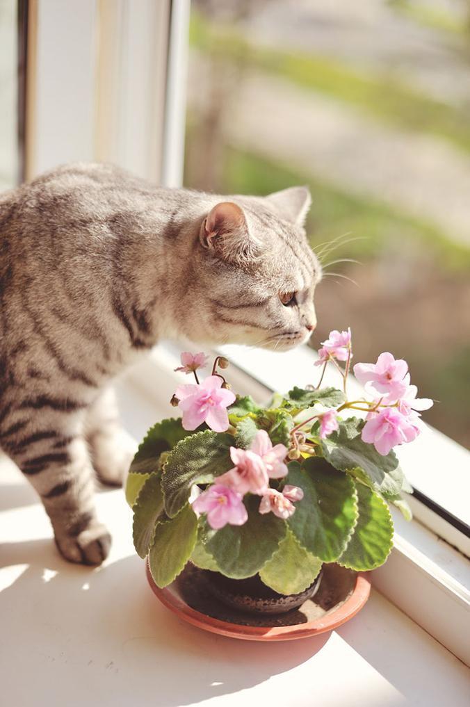 tật xấu của mèo 4