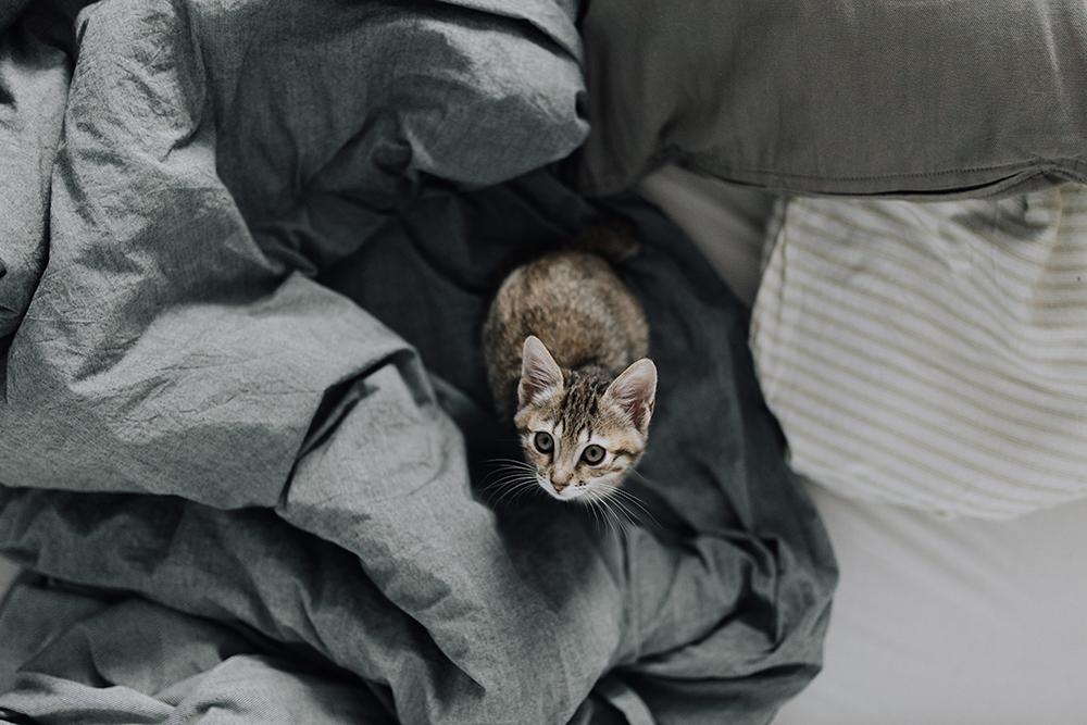 tật xấu của mèo 7