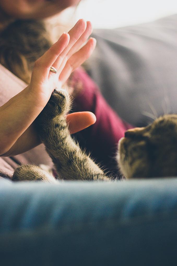 tật xấu của mèo 9