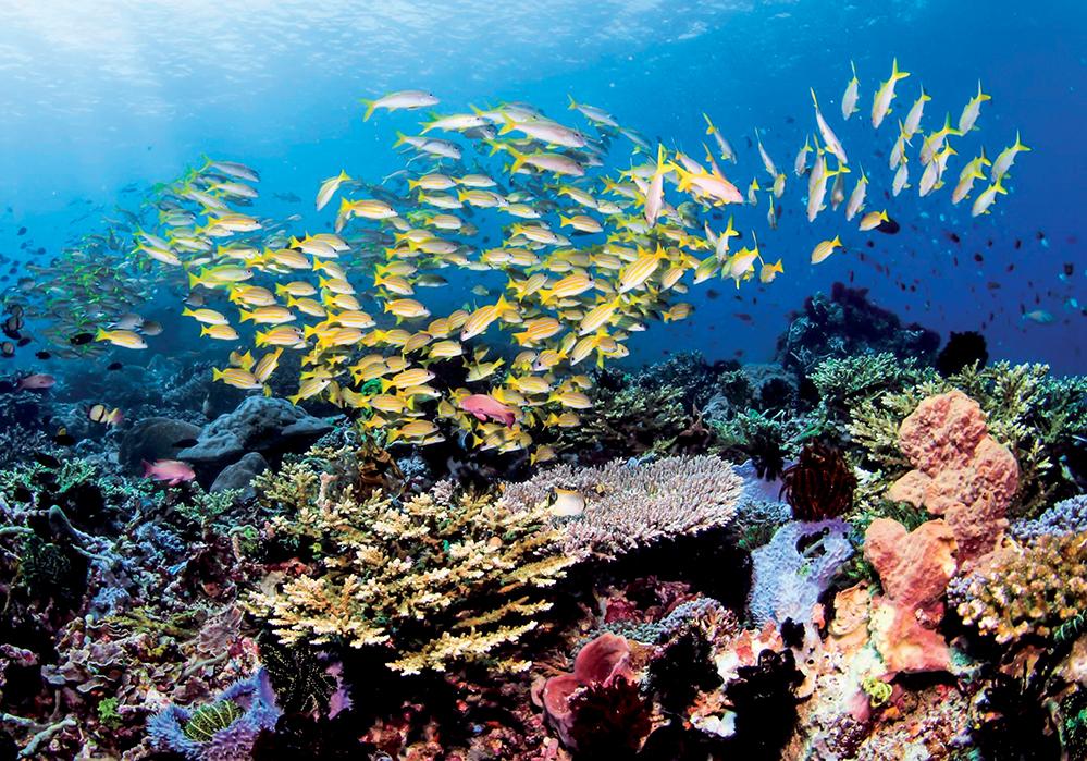 địa điểm lặn biển 1