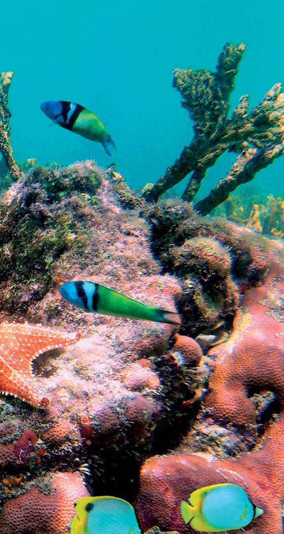 địa điểm lặn biển 10