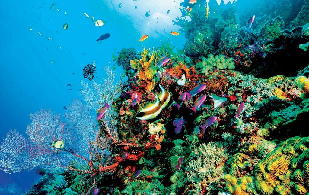 địa điểm lặn biển 13