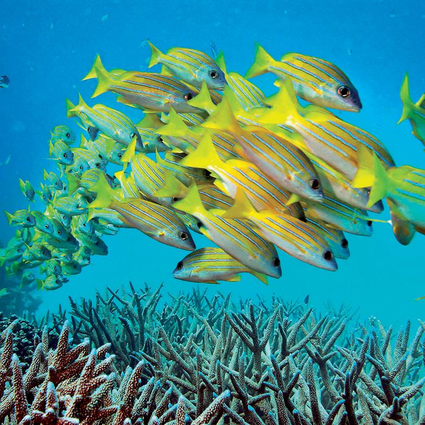 địa điểm lặn biển 14
