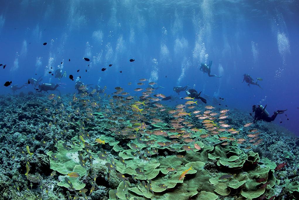 địa điểm lặn biển 16
