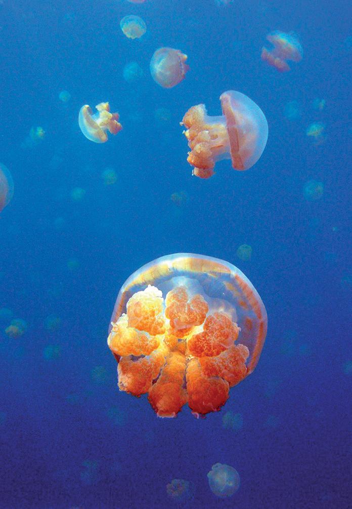 địa điểm lặn biển 17