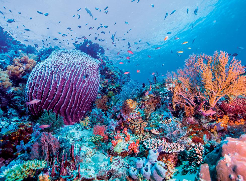 địa điểm lặn biển 2