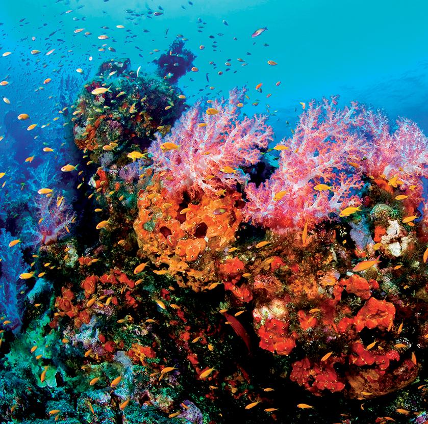 địa điểm lặn biển 4