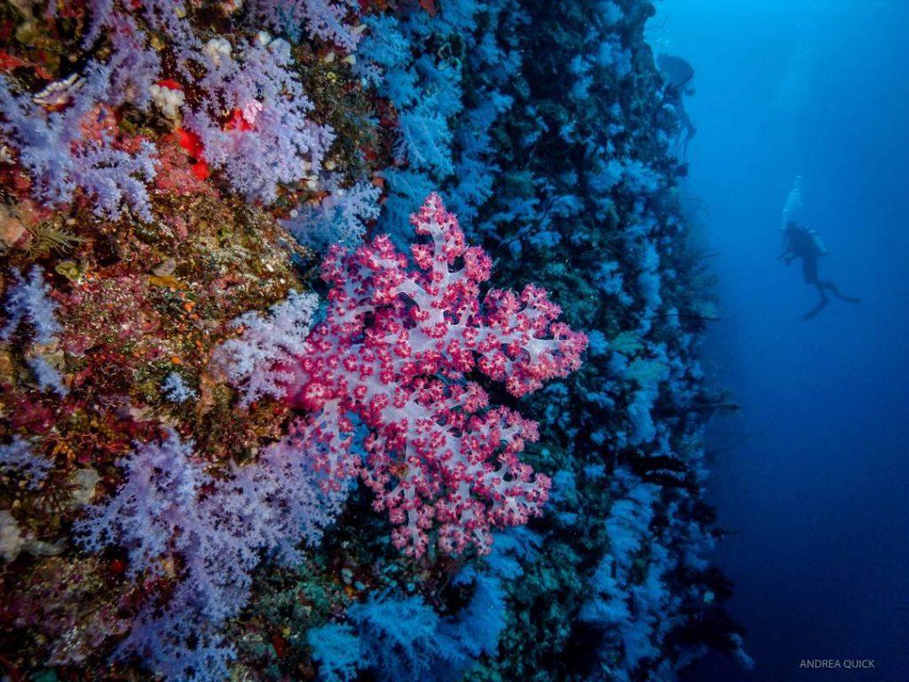 elle việt nam địa điểm lặn biển 31