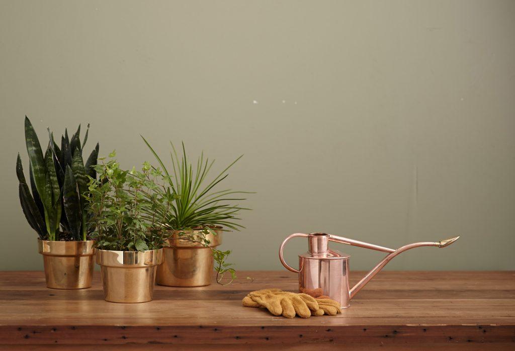 elle việt nam trồng cây trong nhà 13