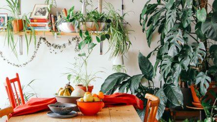 Những lợi ích tuyệt vời của việc trồng cây trong nhà