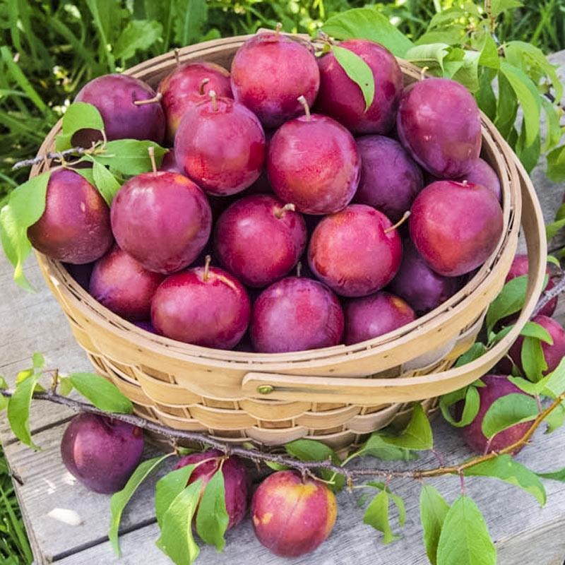 Trái cây và 12 cung hoàng đạo 7