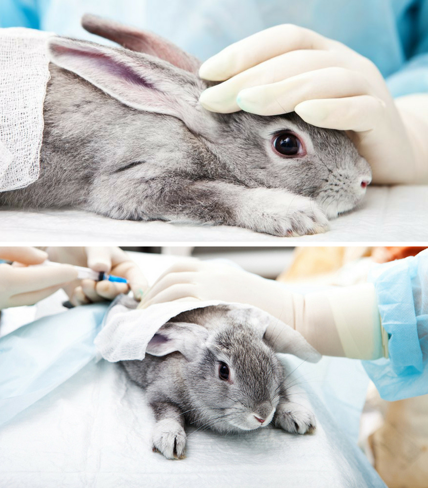 mỹ phẩm thử nghiệm trên động vật 5