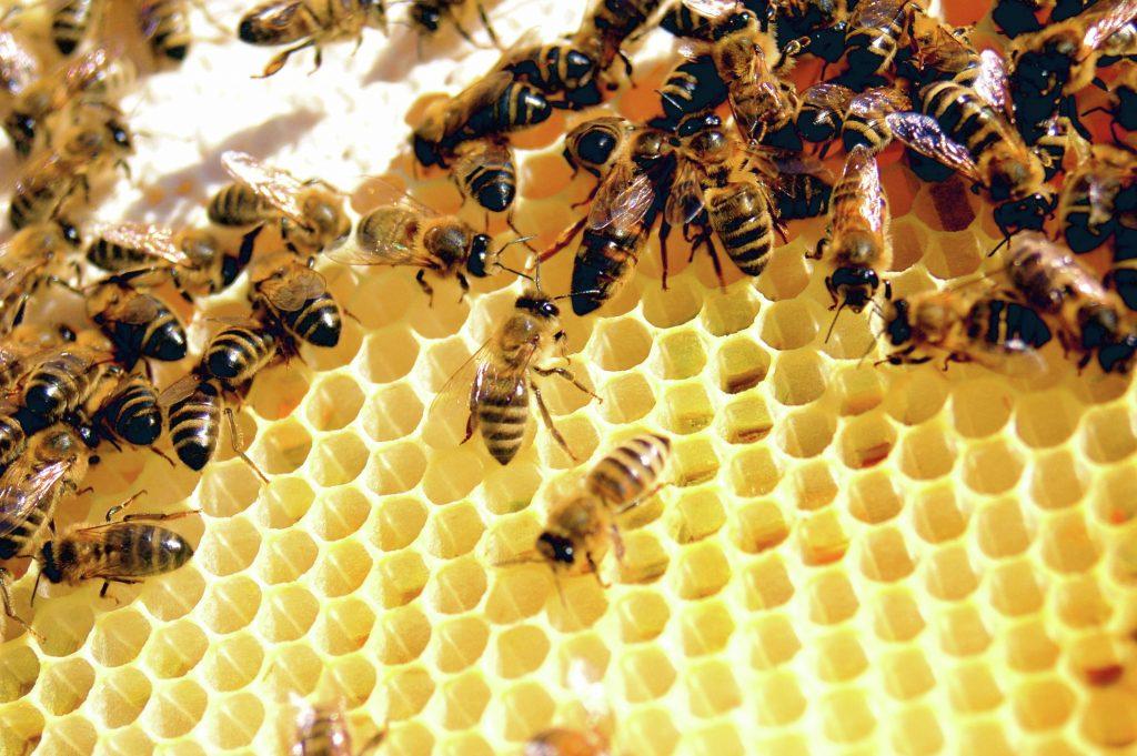 chăm sóc da Bee Venom