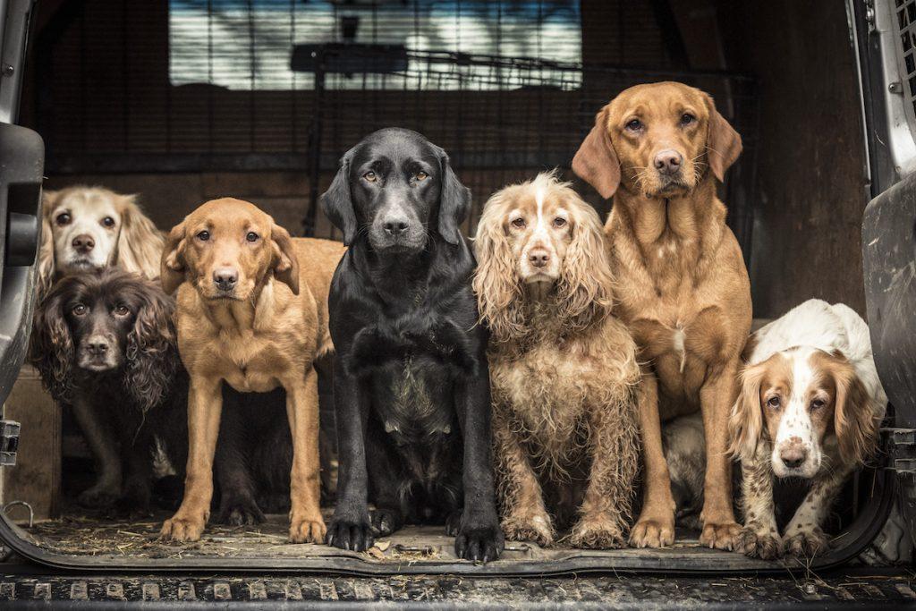 cuộc thi nhiếp ảnh dành cho chó 1