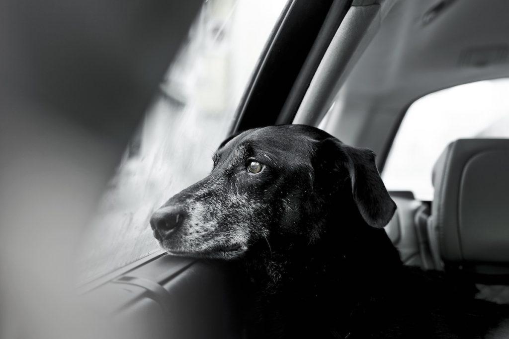 cuộc thi nhiếp ảnh dành cho chó 11