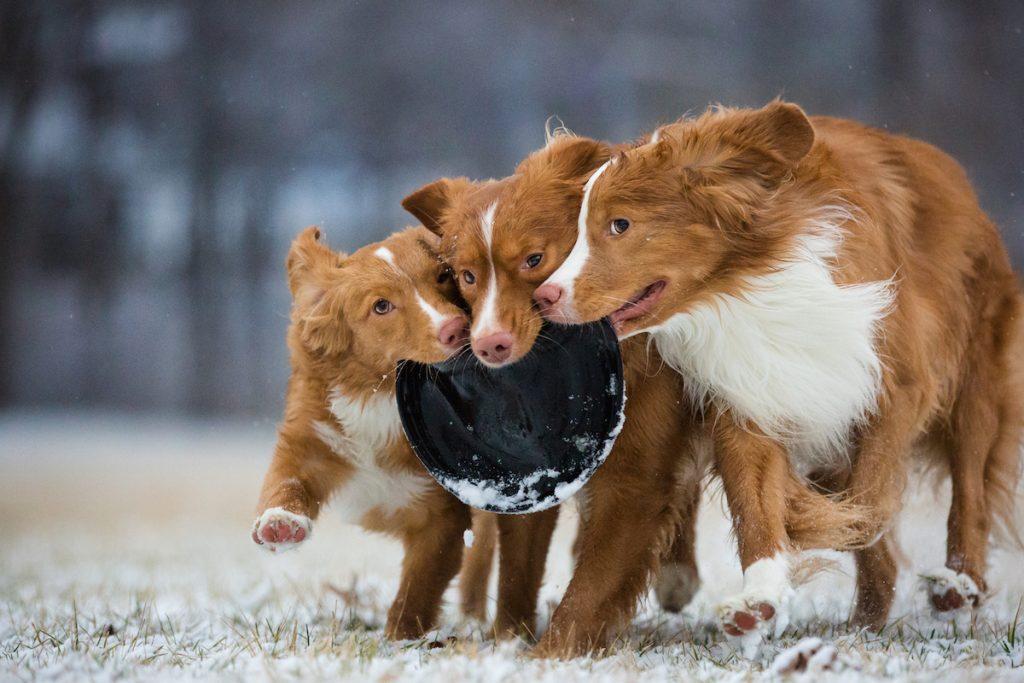 cuộc thi nhiếp ảnh dành cho chó 13