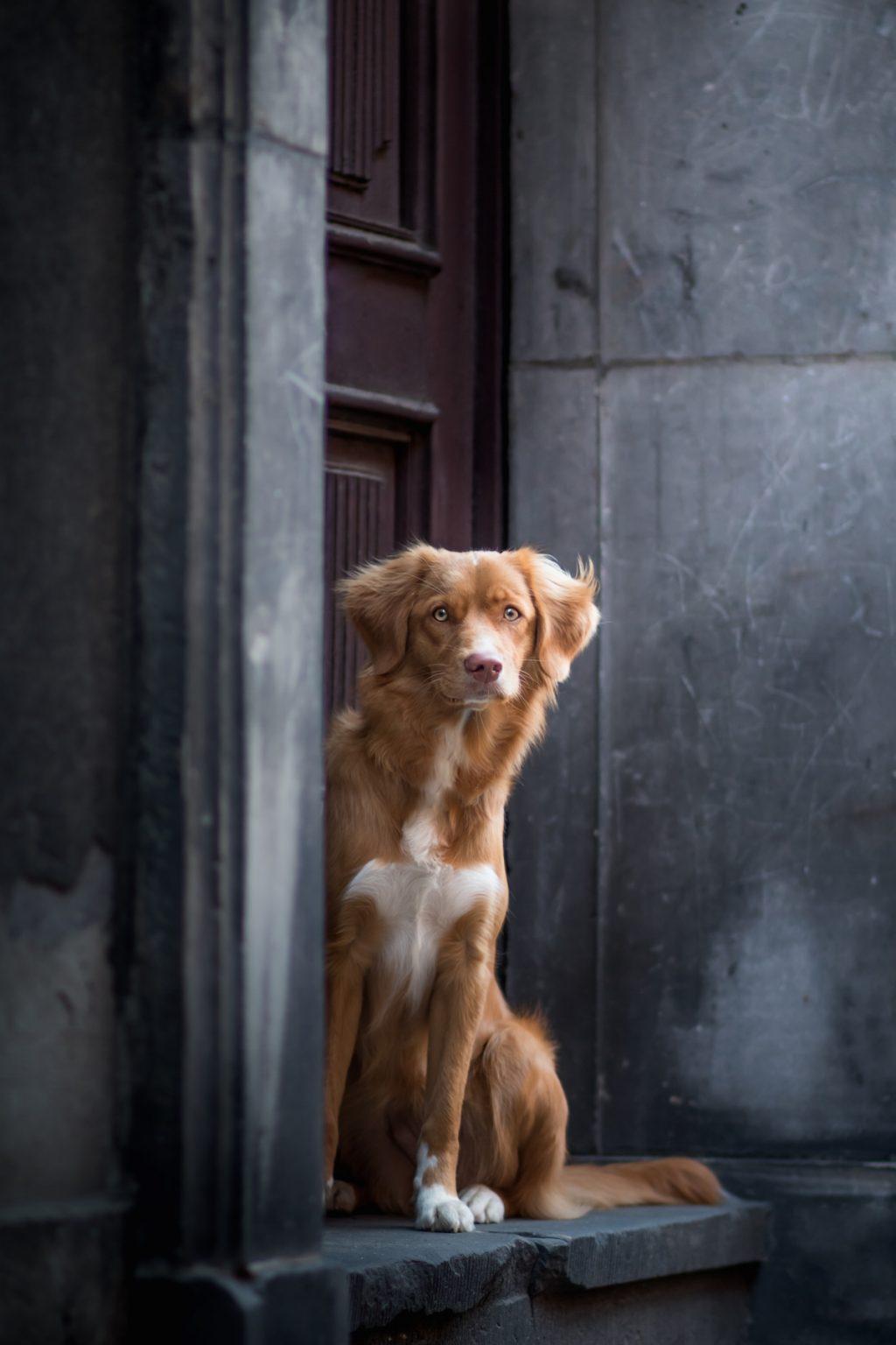 cuộc thi nhiếp ảnh dành cho chó 14