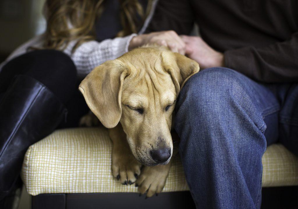 cuộc thi nhiếp ảnh dành cho chó 15